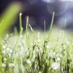 MAPAMA-El Consejo de Ministros aprueba la actualización de la normativa sobre productos fertilizantes
